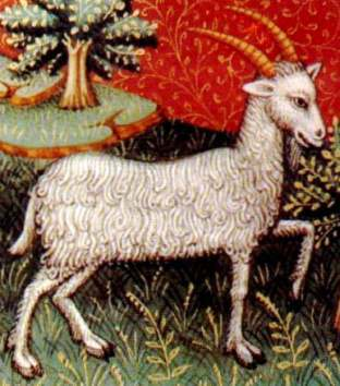 capricorn_new_moon_goat